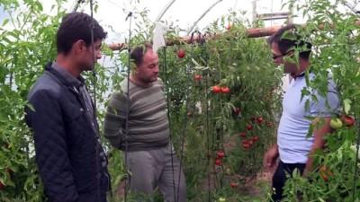Köyüne Dönen Ziraat Mühendisi Köylülere Yol Gösteriyor