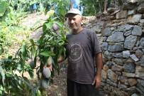 BANGKOK - Tropikal Meyveler Kazanç Kapısına Dönüştü