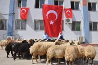 Mehmetçik İçin Sınırda 50 Kurban Kesildi