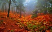 KAZDAĞLARI - Kazdağları Sonbahar Renkleriyle Göz Kamaştırıyor
