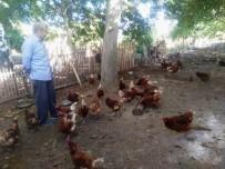 MARKET - Emekli İşçi Kurduğu Tavuk Çiftliğinde Organik Yumurta Üretiyor