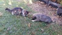 Kangal İle Kedinin Dostluğu