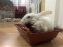 (Özel) Minik Zübeyda, Yaralı Tavşanı İçin Yardım Bekliyor