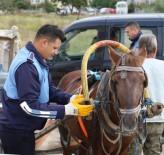 MARKET - Zabıtadan At Arabası Denetimi
