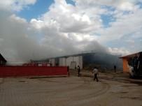 BÜYÜKBAŞ HAYVANLAR - Bolvadin'de Çiftlik Yangını