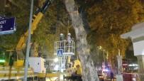 Devrilme Riski Taşıyan Çınar Ağacı Kesildi