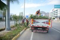 ZAKKUM - Yaya Güvenliğini Tehlikeye  Atan Zakkumlar Budandı
