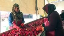 Kulaca'nın Hollanda'ya Salça İhracatında 15 Yılda 15 Kat Artış