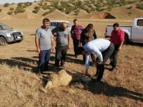 Kırıkkale'de Kurtlar Sürüye Saldırdı, 10 Koyun Telef Oldu