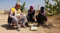 TAVUK ÇİFTLİĞİ - Hobiyi, Çiftliğe Çeviren Çift, 'Yumurta' İle Para Kazanmaya Başladı