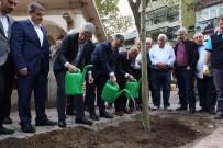 MEHMET ELLIBEŞ - Kesilen Tarihi Çınar Ağacının Yerine Yenisi Dikildi