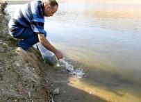 Demirköprü Barajı'na Yayın Balığı Takviyesi