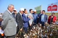 TEKSTİL SEKTÖRÜ - Denizli'de Bu Yıl 51 Bin Ton Kütlü Pamuk Üretimi Bekleniyor