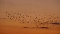 Kuşların Gün Batımı Dansı Hayran Bıraktı