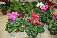 Soğuk Havalarda Çiçek Bakımı