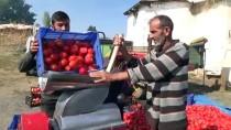 Çiftçilerin Domates Salçası Mesaisi