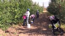 Doğunun Organik Meyveleri Avrupa Pazarında