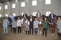 Çorum Belediyesi Binicilik Tesisleri Hizmete Açıldı