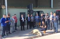 Erdek'te Zeytin Alım Kampanyası Başladı