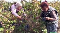 Tescilli 'Hardaliye' Avrupa Pazarına Açılacak