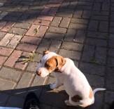 Kaybolan Köpeğini Bulana Ödül Verecek