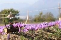 Doğal Fotoğraf Platosu 'Safran Tarlaları'