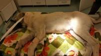 Trafik Kazasında Yaralanan Köpeğe Nevşehir Belediyesi Sahip Çıktı