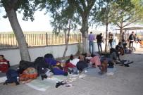 Ayvalık'ta 91 Düzensiz Göçmen Jandarmadan Kaçamadı