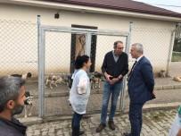 Başkan Babaoğlu, Hayvan Barınağında İncelemelerde Bulundu