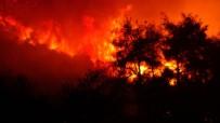 Bursa'da Çıkan Orman Yangını 4 Saatte Kontrol Altına Alındı