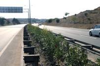 ZAKKUM - Çorlu'da Ağaçlandırma Ve Bitkilendirme Çalışmaları