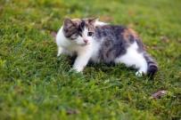 EZİLME TEHLİKESİ - Görme Engelli Yavru Kediyi Hayata Bağladılar