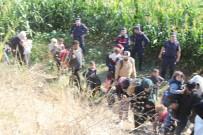 Tarlaya Mısır Ektiler, Düzensiz Göçmen Biçtiler