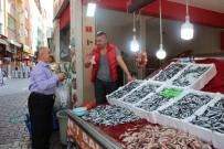 Türkeli'de Hamsi Bereketi