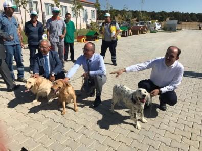 Türkiye'nin En Büyük Ve En Modern Hayvan Barınağı Konya'da