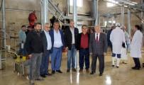 FARUK GÜNAY - Erzincan'da Hayvan Kesiminde Yaşanan Sıkıntılar Çözüme Kavuşturuldu