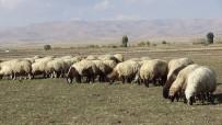 Muş'ta Tarım Ve Hayvancılık Terörün Bitmesiyle Canlandı