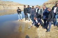 OLTA - Beylerderesi Göletine 10 Bin Sazan Bırakıldı