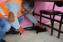 Hasta Kedinin İmdadına Terme Belediyesi Yetişti