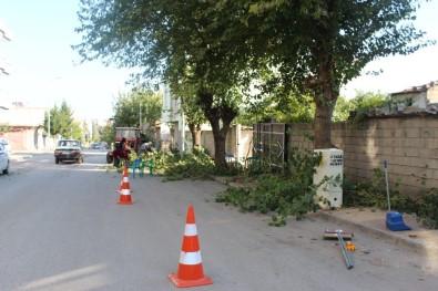 Kahta'da, Ağaç Budama Çalışmalarına Başlanıldı