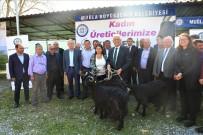 OSMAN GÜRÜN - Muğla Büyükşehirden Kadın Üreticilere 'Kıl Keçisi' Desteği