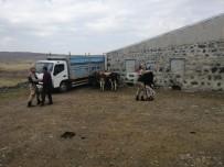 Arpaçay'da Kaybolan Hayvanlar Bulundu