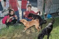 Gaziosmanpaşa'da Çocuklar Hayvan Barınağını Gezip, Mama Dağıttı