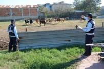 Kartepe'de Hayvan Barınakları Tarım Alanlarına Taşınıyor