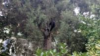 Köpekten Korkan Kediyi İtfaiye Erleri Ağaçtan İndirdi
