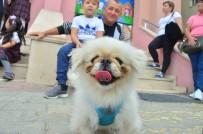 (Özel) Altı Okul Barınaktan Köpek Sahiplendi