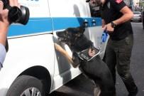 POLİS KÖPEĞİ - Polis Kadıköy'de Kuş Uçurtmadı