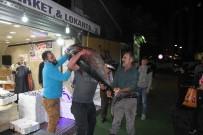 Rize'de 90 Kiloluk Orkinosa Büyük İlgi