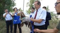 FARUK GÜNAY - Hayvanları Koruma Günü'nde, Doğal Ortamlarına Bırakıldılar