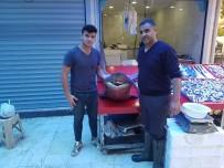 Kanser Hastaları İçin Köpek Balığı Getirtti